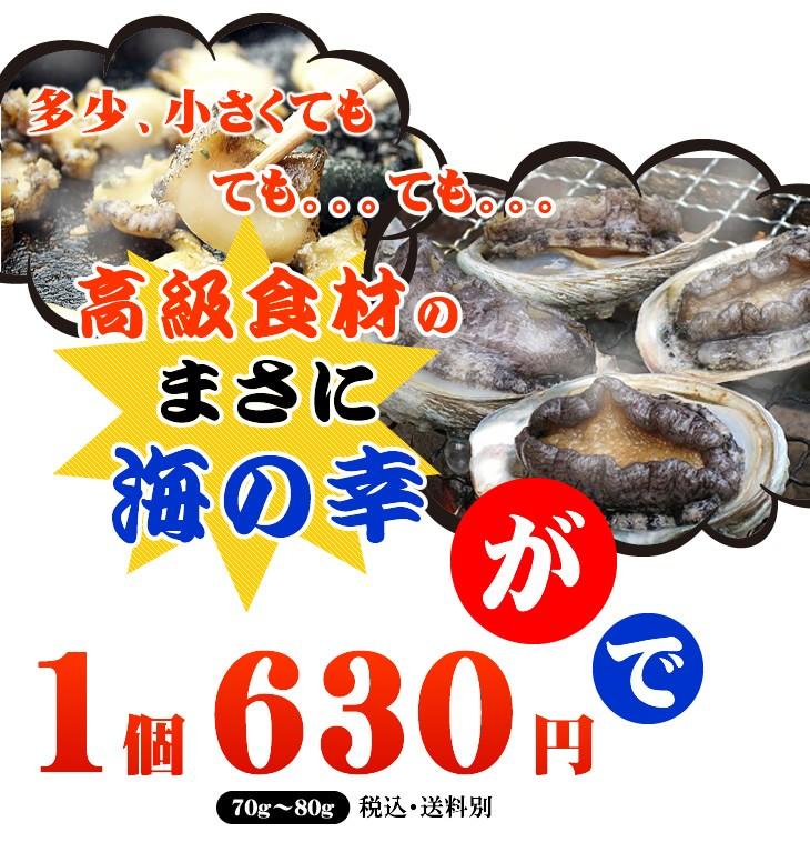 多少、小さくてもても。。。ても。。。高級食材のまさに海の幸が70g〜80g 1個 580円 ・送料別 あすつく対応で