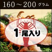 捌いて発送 国産天然 伊勢エビ 1尾 160g〜200g[伊勢海老]