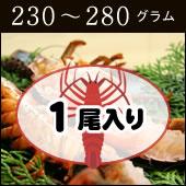 捌いて発送 国産天然 伊勢エビ 1尾 230g〜280g[伊勢海老]