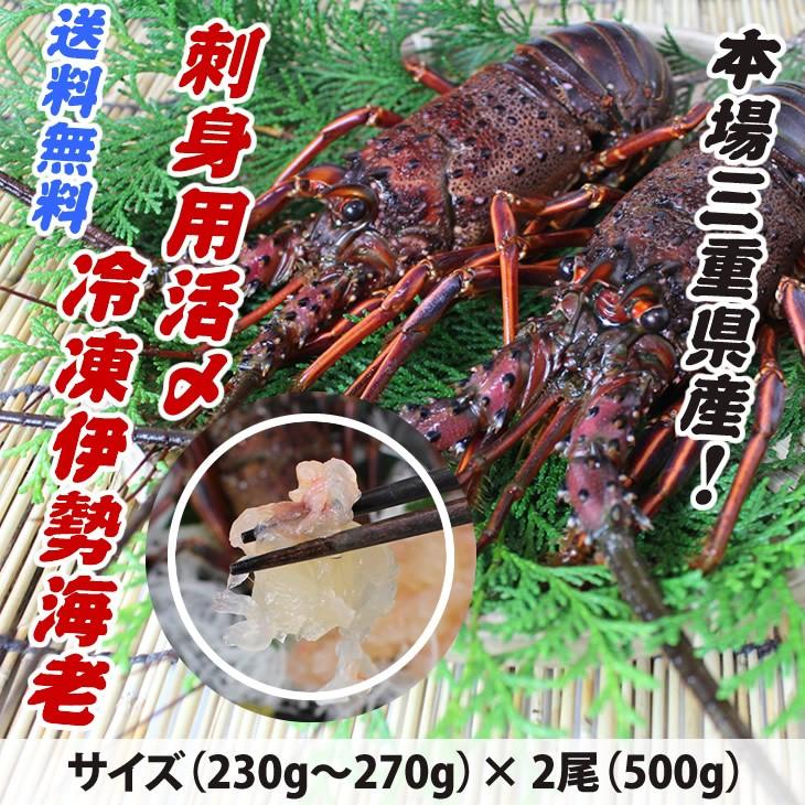 本場三重県産!刺身用活〆冷凍伊勢海老/サイズ(230g〜270g)×2尾(500g)