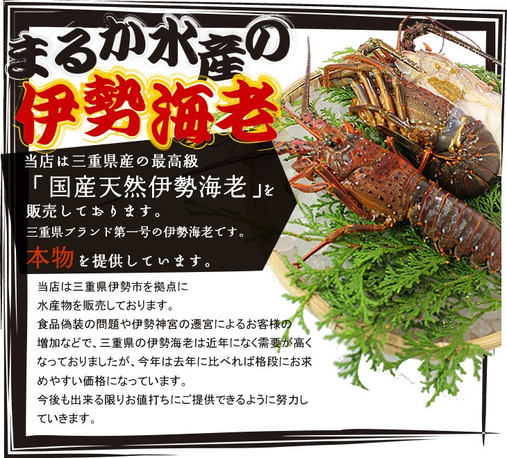 当店は三重県産の最高級「国産天然伊勢海老」を販売しております。三重県ブランド第一号の伊勢海老です。
