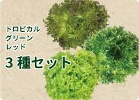 トロピカル グリーン レッド リーフレタス3種セット
