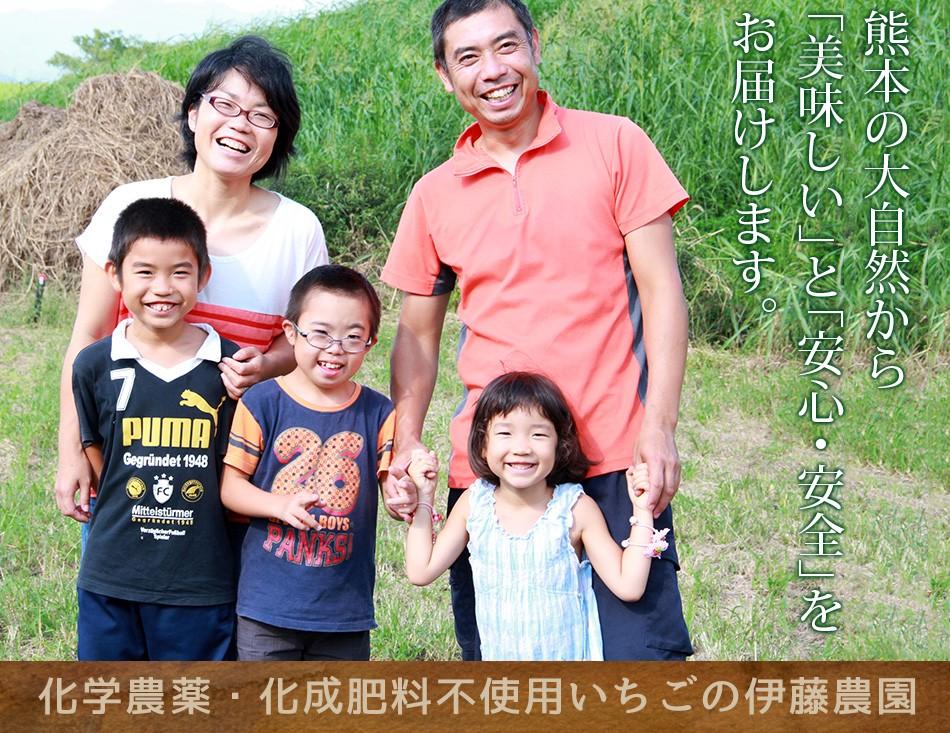 熊本伊藤農園、化学農薬不使用 化学肥料不使用 有機肥料で栽培したいちご