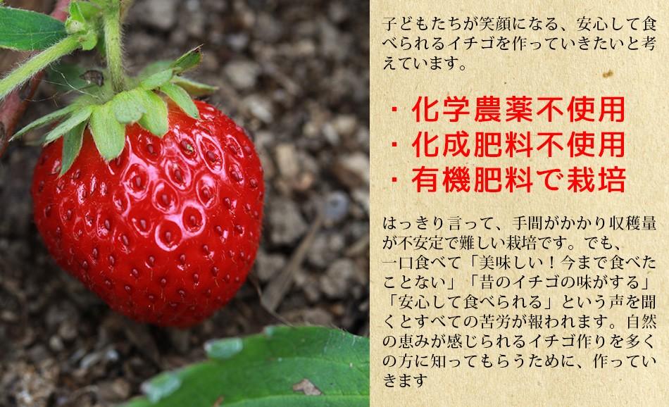 自然の豊かな恵みにより育まれる有機肥料を厳選しして大切に育てたいちご、伊藤農園