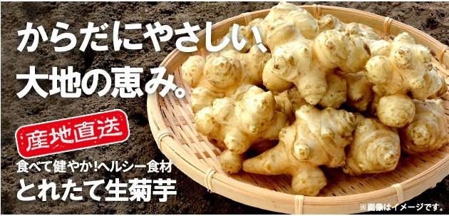 とれたて!生菊芋 1kg