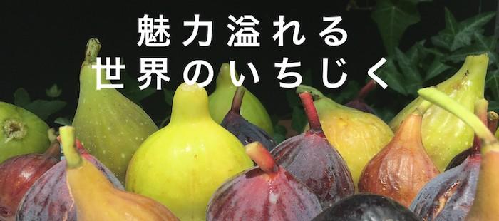 """""""外国産種のいちじく"""""""