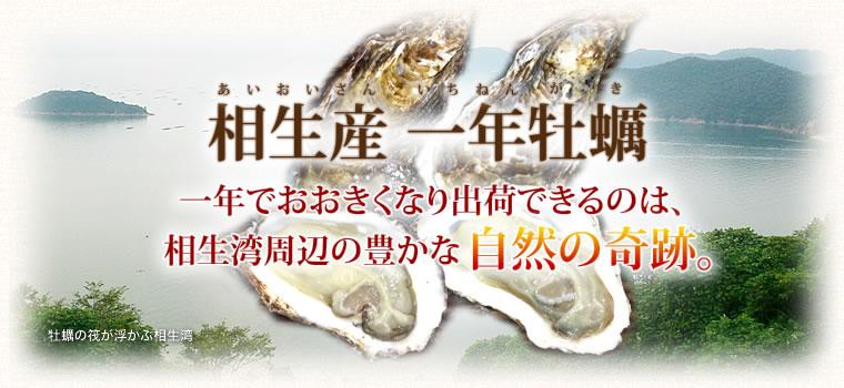 相生産 一年 牡蠣(かき)一年でおおきくなり出荷できるのは、相生湾周辺の豊かな自然の奇跡。