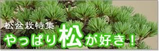 「やっぱり松が好き!」松盆栽特集