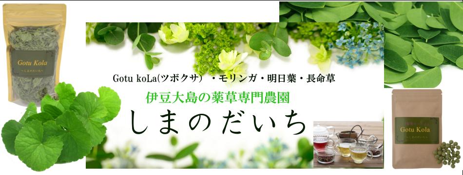 伊豆大島の健康茶専門農場