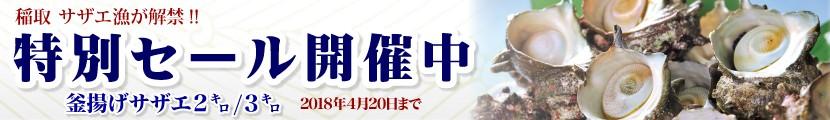 稲取サザエ漁解禁特別セール開催中