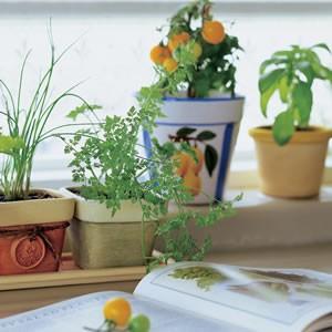 子どもと一緒に!植木鉢をリメイクしてお庭を素敵に飾ろう