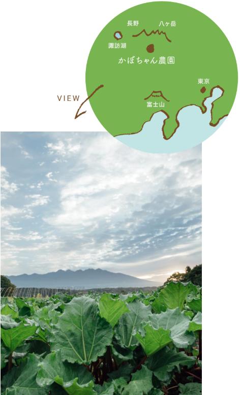 かぼちゃん農園地図