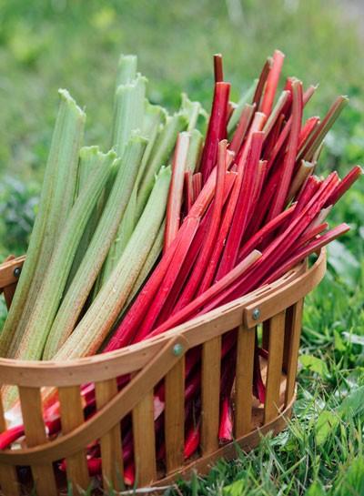 春の訪れを告げる野菜、ルバーブ