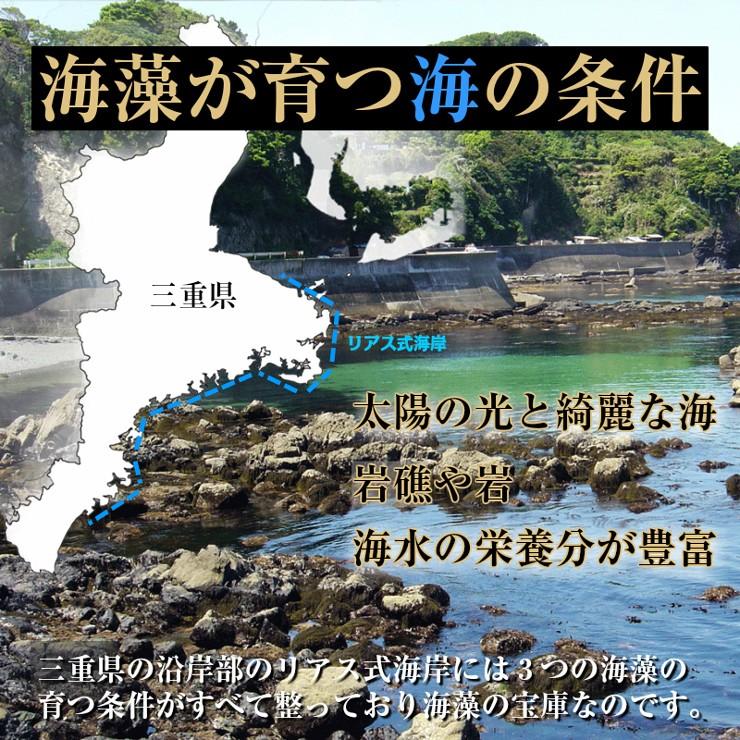 海藻が育つ海の条件
