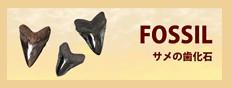 サメの歯化石