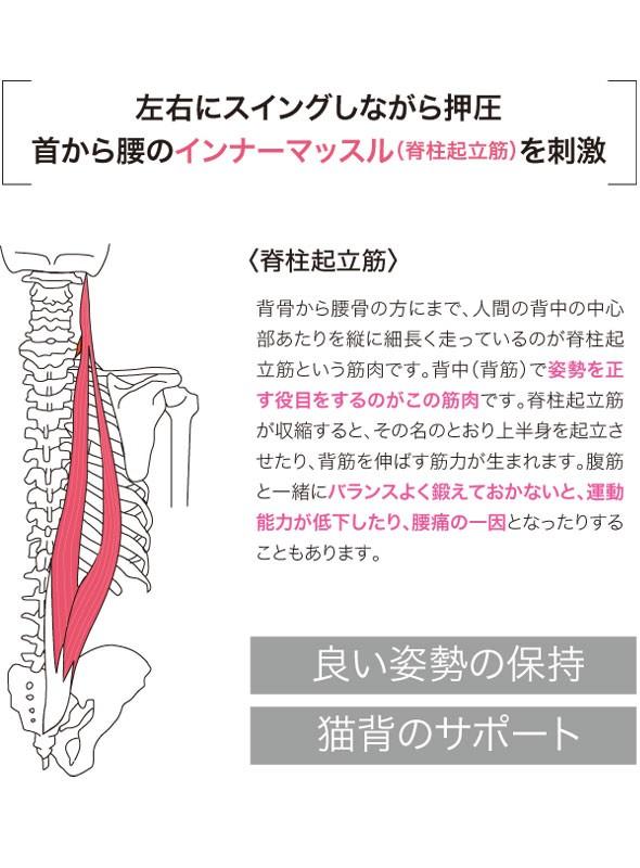 左右にスイングしながら押圧 首から腰のインナーマッスル、脊柱起立筋を刺激。脊柱起立筋。背骨から腰骨の方にまで、人間の背骨の中心部あたりを縦に細長く走っているのが脊柱起立筋という筋肉です。背中・背筋で姿勢を正す役目をするのがこの筋肉です。脊柱起立筋が収縮すると、その名のとおり上半身を起立させたり、背筋を伸ばす筋力が生まれます。腹筋と一緒にバランスよく鍛えておかないと運動能力が低下したり、腰痛の一因となったりすることもあります。良い姿勢の保持、猫背のサポート