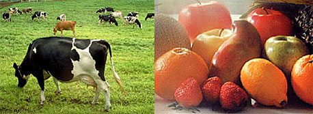 牧場と果物