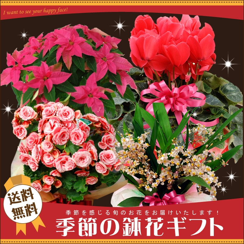 季節の鉢花ギフト