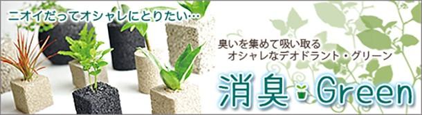 消臭グリーン 観葉植物 デオグリーン