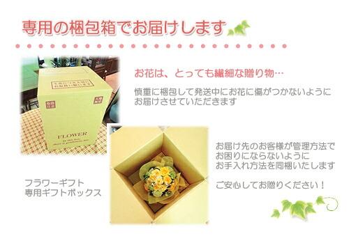 インテリアグリーン 送料無料 ネット通販花屋花樹有(かじゅある )