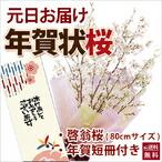 山形の啓翁桜 お正月元旦に届く 気軽に飾れるサイズ80cm啓翁桜の年賀状