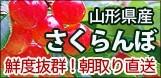 山形県産さくらんぼ佐藤錦 送料無料 ネット通販花屋 花樹有(かじゅある)山形の花屋