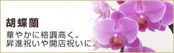 銀座花門:胡蝶蘭