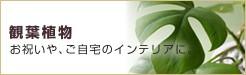 銀座花門:観葉植物