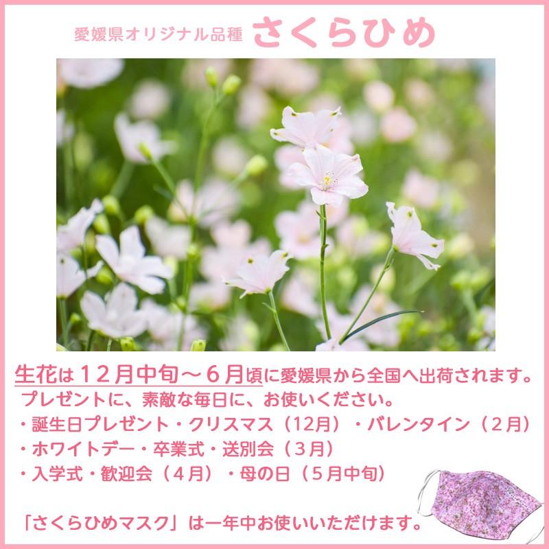さくらひめ生花は12月から6月