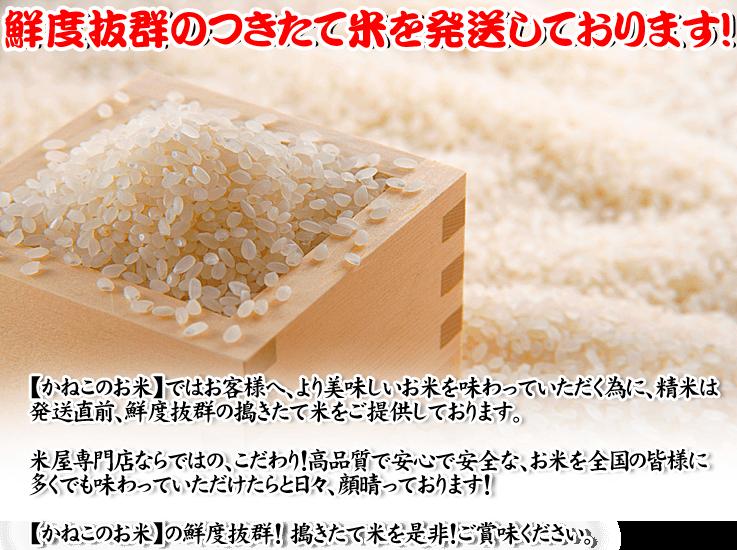 鮮度 抜群 搗きたて米 かねこのお米