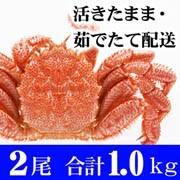 活毛蟹 500g中サイズ