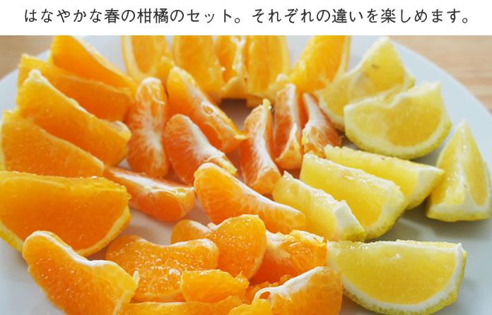 母の日柑橘
