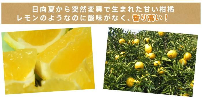 愛媛産はるか大人気柑橘です