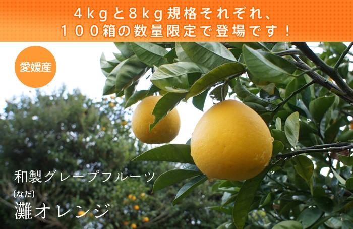 灘オレンジ