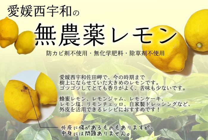 愛媛の無農薬レモン