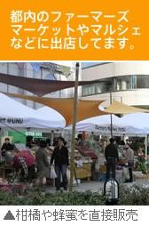 ファーマーズマーケット 柑橘