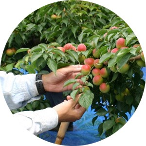 収穫・加工のヒミツ