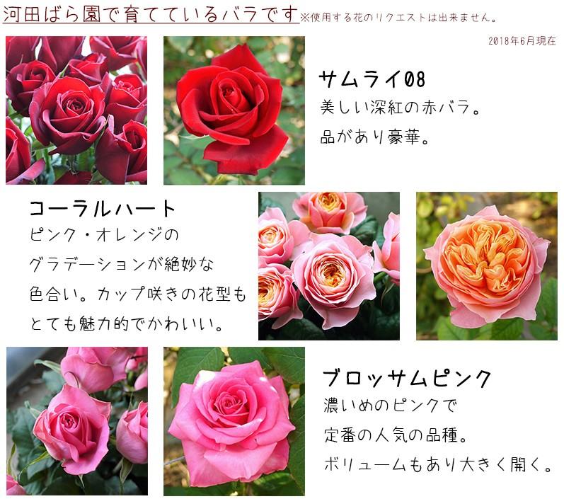 河田ばら園で育てているバラです01