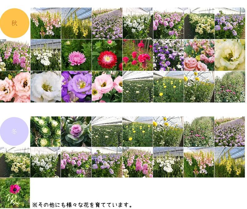 河田ばら園で育てている花です02
