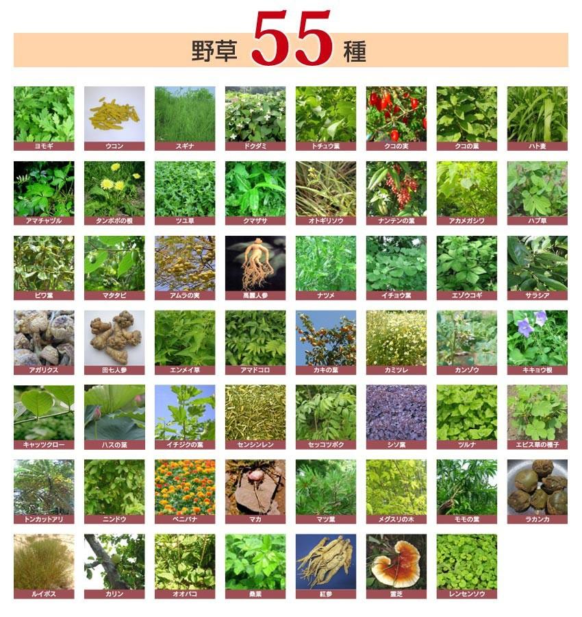 職人自らが選んだ厳選素材80種類の野草 生酵素