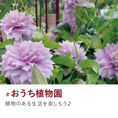 おうち植物園