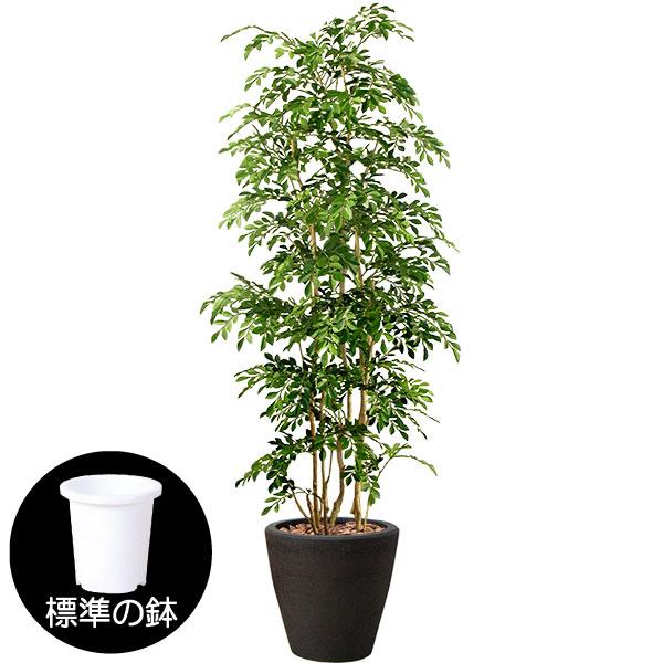 トネリコの人工樹木(ブラック陶器鉢カバー使用)