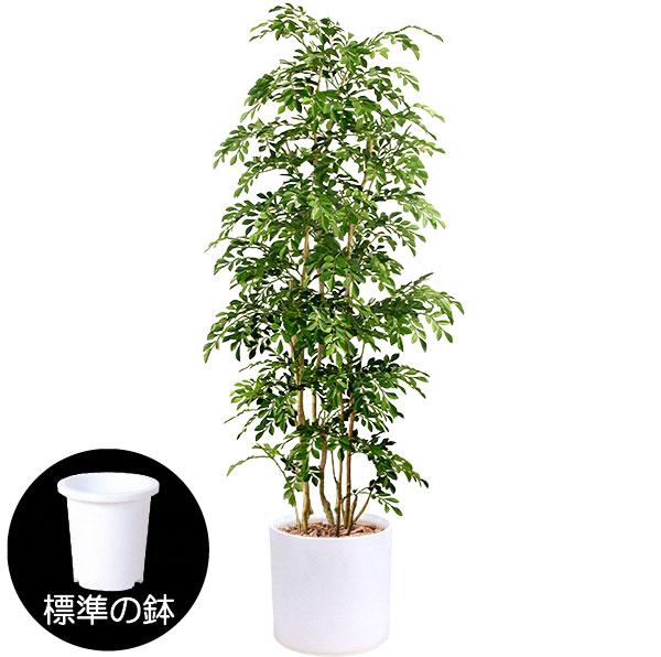 造花トネリコ人工樹木(ホワイト陶器鉢カバー使用)