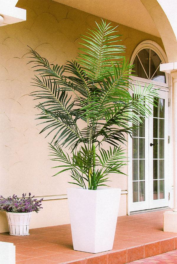 ボリューム感のあるアレカパームはシンボルツリーとして最適です。