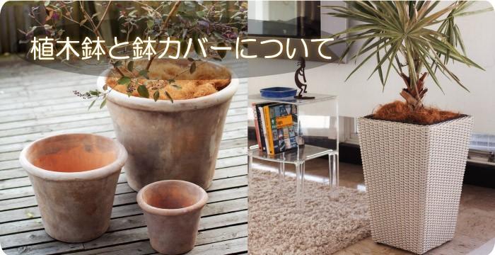 植木鉢と鉢カバーについて