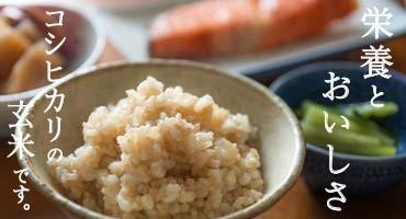 新潟産コシヒカリの玄米
