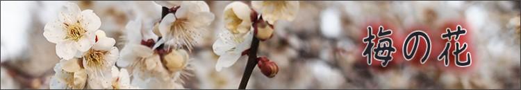 三重県松阪市の自宅の庭や畑、山々の美しい自然を撮影しました。