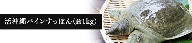 活沖縄パインすっぽん(約1kg)