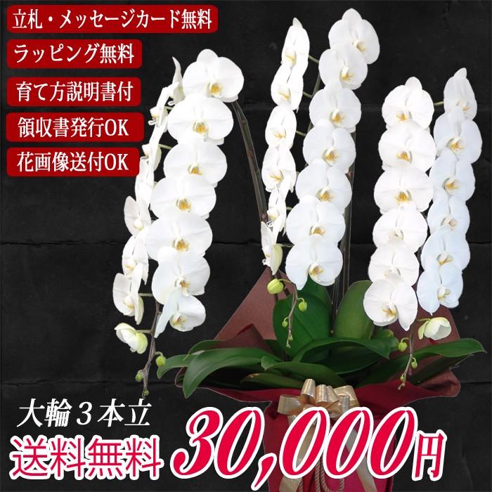 大輪胡蝶蘭3本立30,000円
