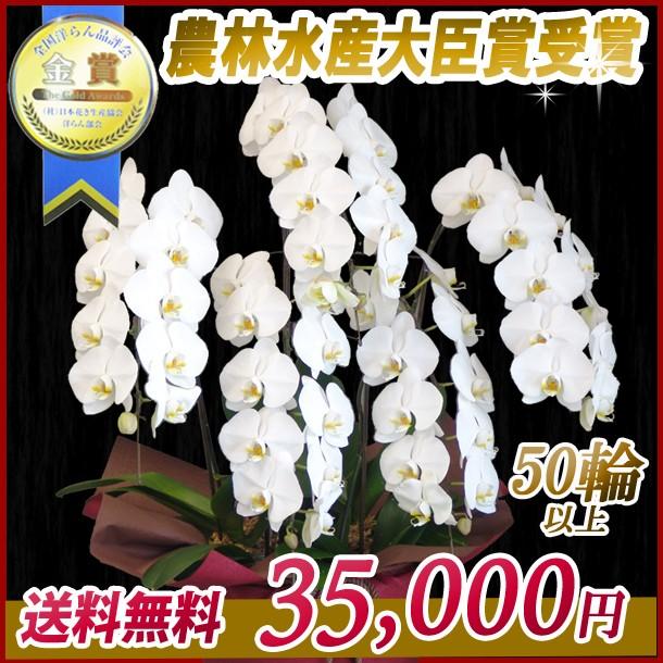 大輪胡蝶蘭5本立 35,000円